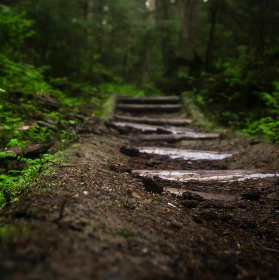 stepping stones through a forest